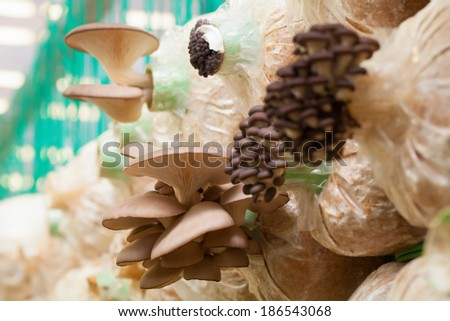 mushroom Farm  - stock photo