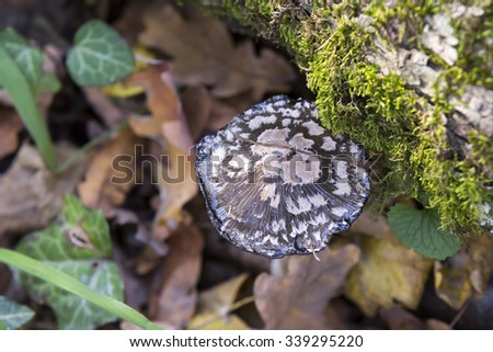 Mushroom in a forest in autumn