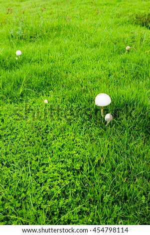 Mushroom spreadly grew up on the grassyard.