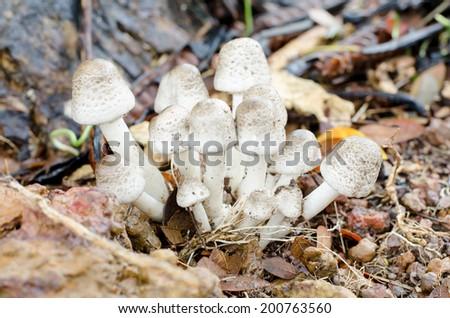 mushrooms. - stock photo