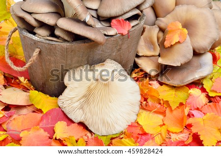 Mushrooms against a background of autumn leaves