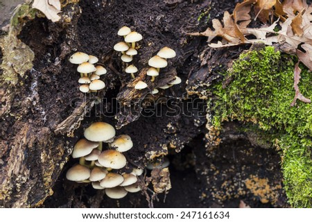 mushrooms and moss in the forest - stock photo
