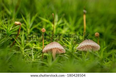 Mushrooms and periscopes - stock photo