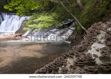 Mushrooms at the tree trunk near waterfall - stock photo