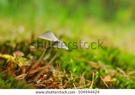 Mushrooms background - stock photo