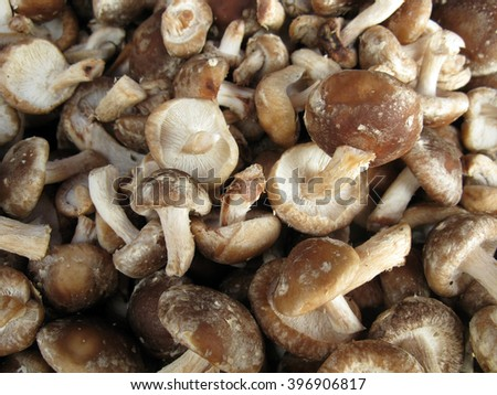 Mushrooms background, neutral background, neutral texture