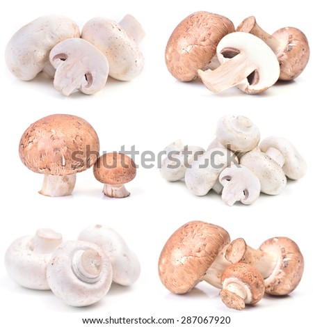 Mushrooms champignon - stock photo