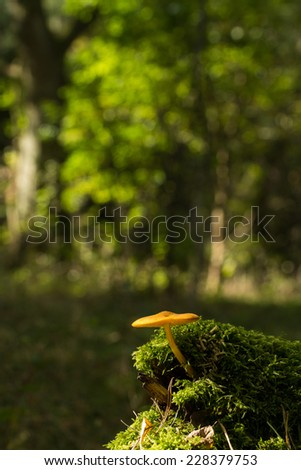 mushrooms in a forest in the Mueritz National Park in Germany