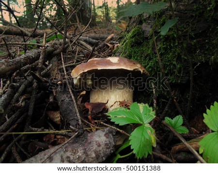 mushrooms in a forest in tuscany. italy.