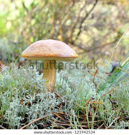 mushrooms in forest - stock photo