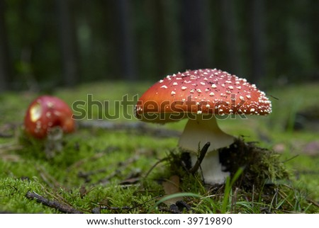 mushrooms in the forest, macro