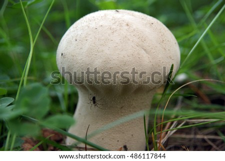 Mushrooms in the forest. Tver oblast. Russia.