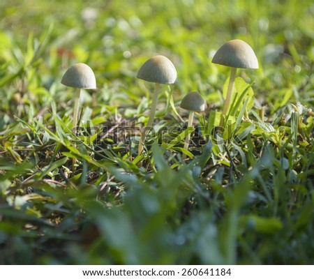 Mushrooms in the grass field - stock photo