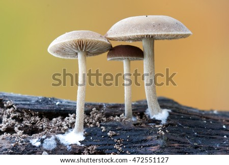 Mushrooms in the nature
