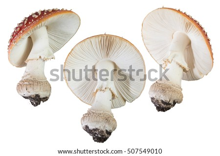 Mushrooms isolated low angle