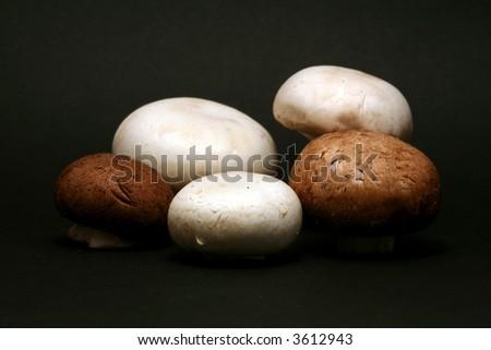mushrooms on black background - stock photo