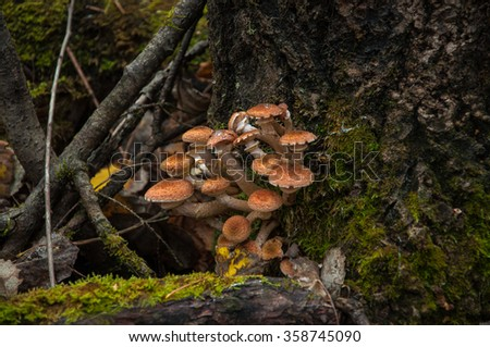 mushrooms on stump