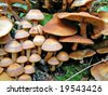mushrooms on stump tree - stock photo