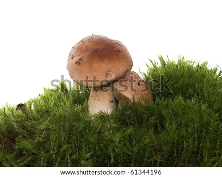 mushrooms on the moss isolated on the white background