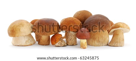 Mushrooms on white background - stock photo