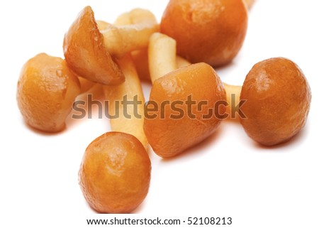Mushrooms on white background close