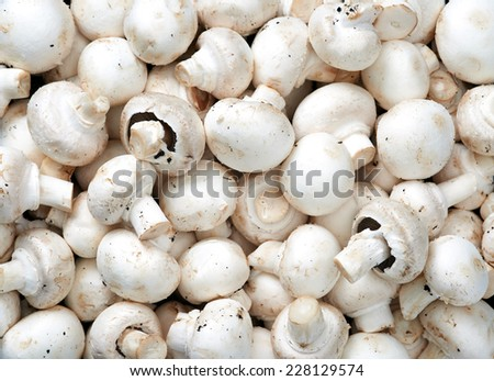 Mushrooms Raw fruit and vegetable backgrounds overhead perspective, part of a set collection of healthy organic fresh produce - stock photo