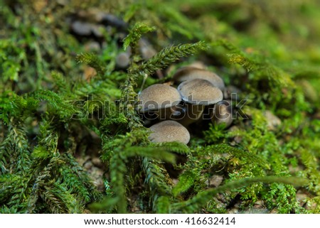 Mushrooms, wild mushrooms, plants, fungi, food, in the forest, nature. - stock photo
