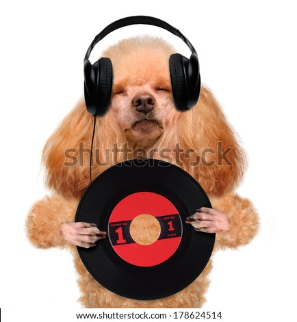 music headphone vinyl record dog - stock photo
