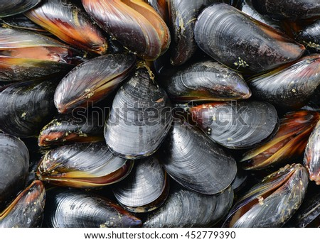 mussel background