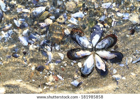 Mussel flower and broken shells in shallow water. - stock photo