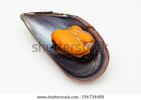 Mussel on a white background - stock photo