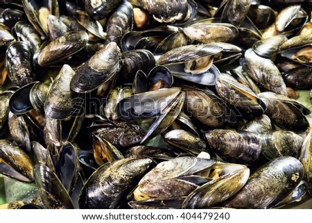 Mussel shells; background of mussel shells  - stock photo