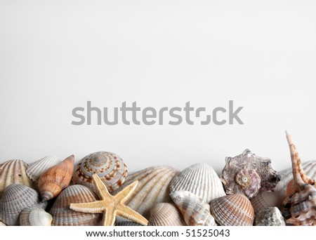 mussels and starfish