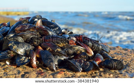 Mussels on the rocks against a stormy sea - stock photo