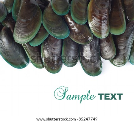 mussels on white background with sample text - stock photo