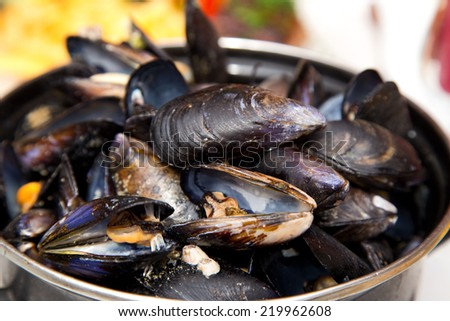 mussles - stock photo