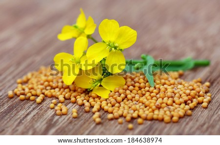 Mustard flowers with seeds on wooden surface - stock photo