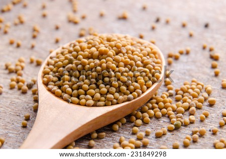 Mustard seeds for preparing mustard or seasoning. - stock photo