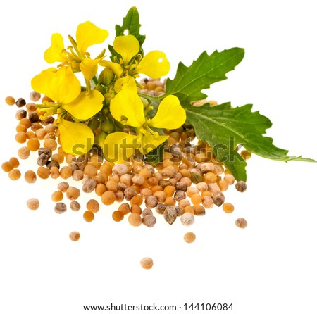 Mustard seeds heap and mustard flower isolated on white background - stock photo