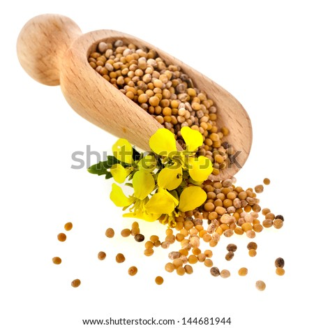 Mustard seeds heap in wooden scoop spoon isolated on white background - stock photo