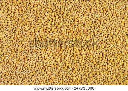 Mustard seeds - Spice seasoning - stock photo