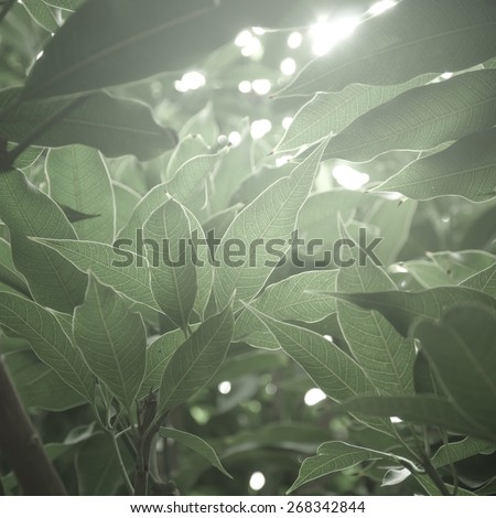 Muted green color leaves against sunlight. An abstract nature background. - stock photo