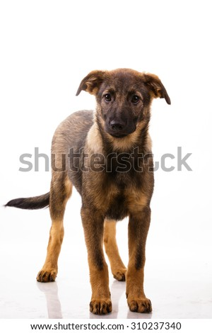 Mutt dog isolated