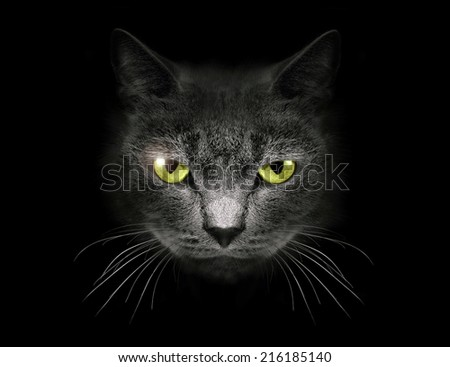 Muzzle a cat on a black background.