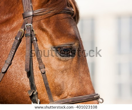 Muzzle horse in white background. Profile. Close up.