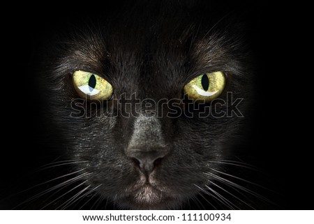 muzzle of a black cat on a black background
