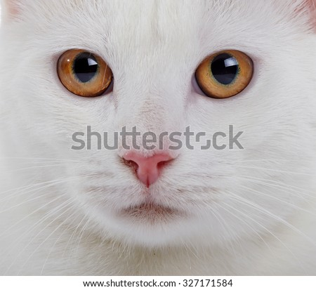 Muzzle of a white domestic cat with yellow eyes close up. - stock photo