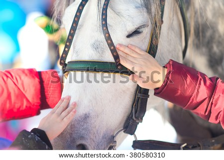 Muzzle of a white horse with his eyes closed, and hands that caress the horse - stock photo