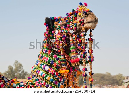 Muzzle of camel, dressed in brightly colored decorations during a national holiday