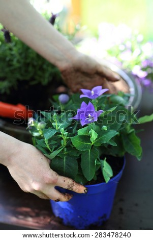 My beautiful garden. Female plants in pot plants forming a beautiful composition flower - stock photo